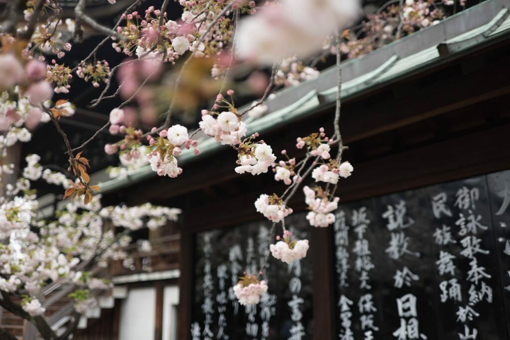 japanese-cherry-blossoms-lessons-about-acceptance-and-change